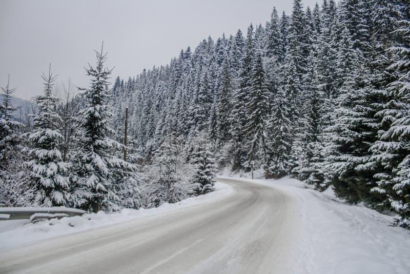 Estrada nevado do inverno e árvores nevados da floresta wallpaper foto de stock royalty free