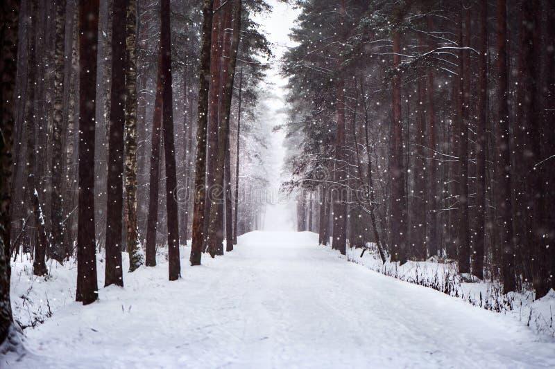A estrada nevado na floresta, neve macia, peludo cai A estrada a l fotografia de stock royalty free