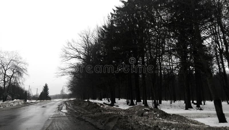 Estrada, neve, floresta fotografia de stock royalty free