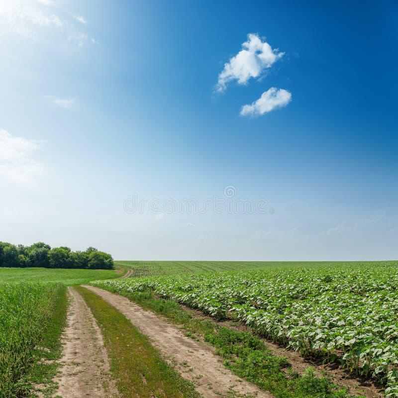 Estrada no campo agrícola verde sob o sol no céu azul foto de stock