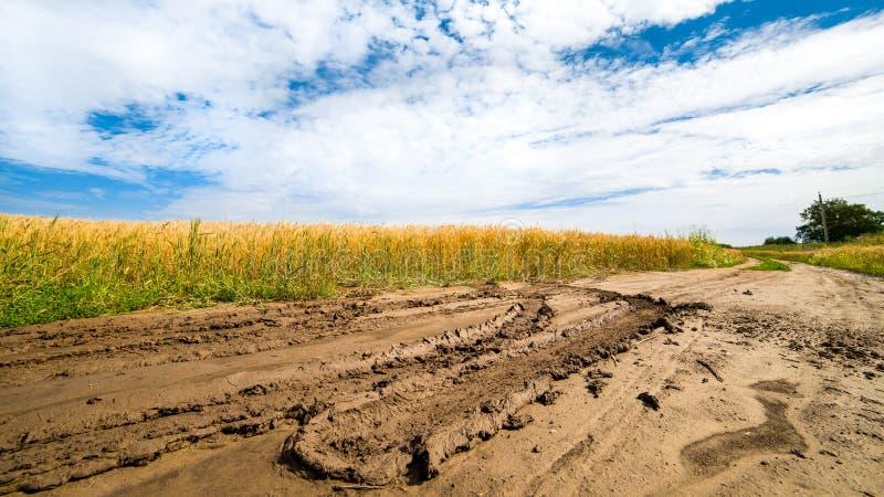 Estrada no campo com trigo maduro fotos de stock