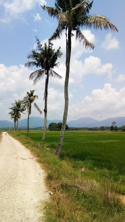 A estrada no campo de arroz, negeri sembilan, malásia fotografia de stock royalty free