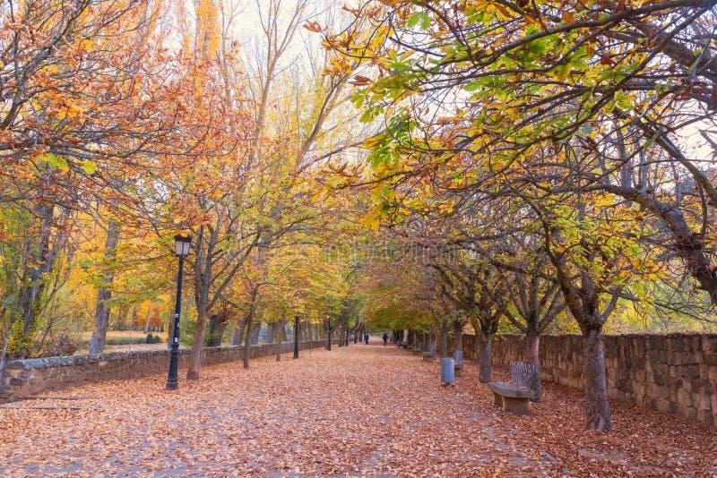 Estrada no outono imagem de stock