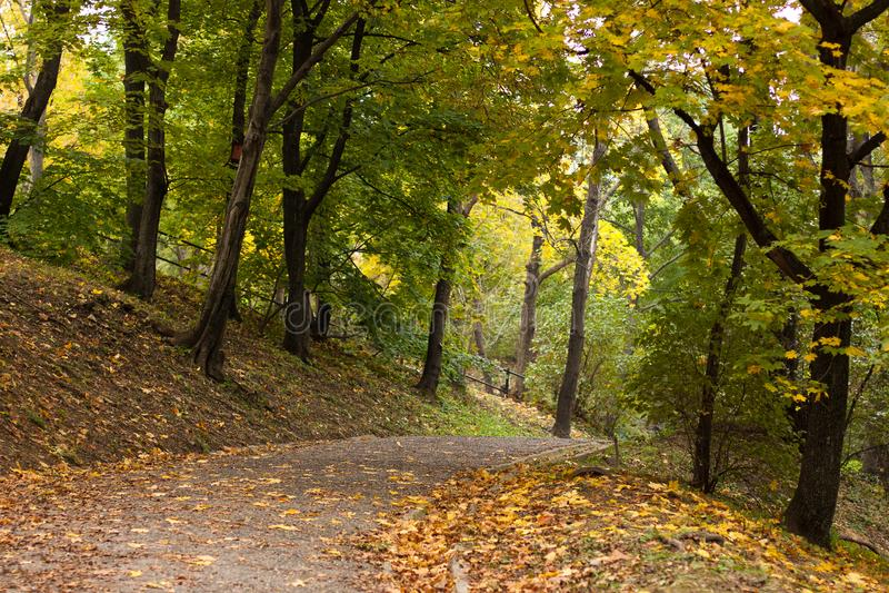 Estrada no parque do outono foto de stock