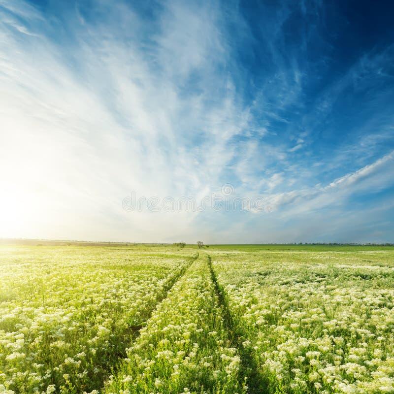 Estrada no prado verde com as flores sob o céu azul imagens de stock royalty free