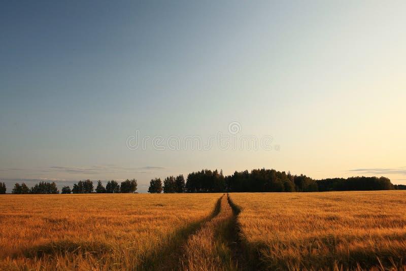 Estrada no rancho foto de stock