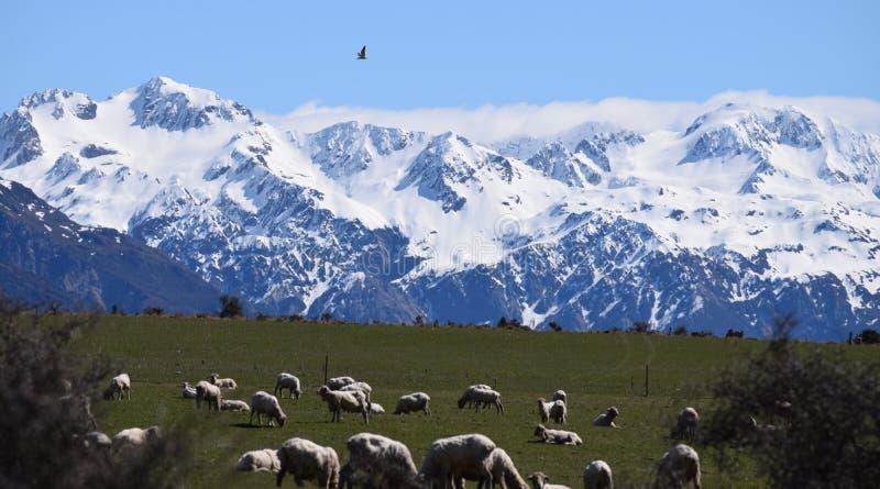 Estrada ocidental velha de Nova Zelândia foto de stock royalty free