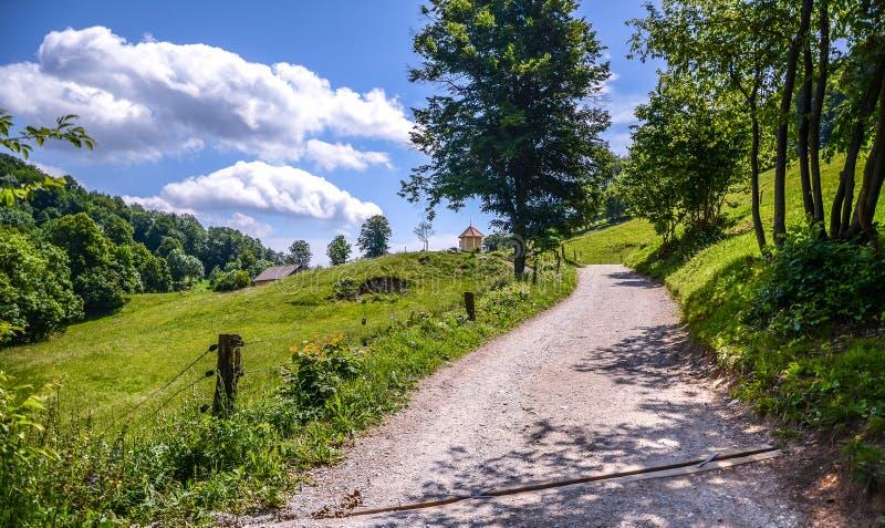 Estrada ou trajeto de floresta nas madeiras e nas montanhas em Eslovênia imagens de stock