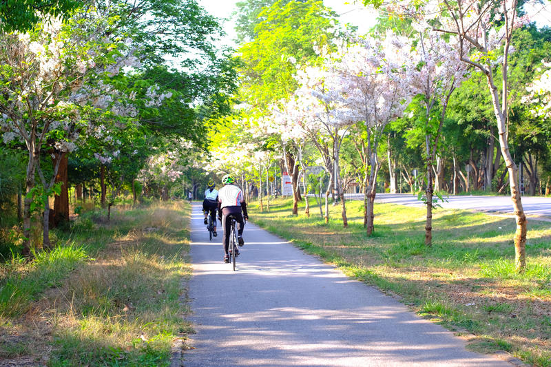 Estrada para a bicicleta e a corrida no jardim foto de stock