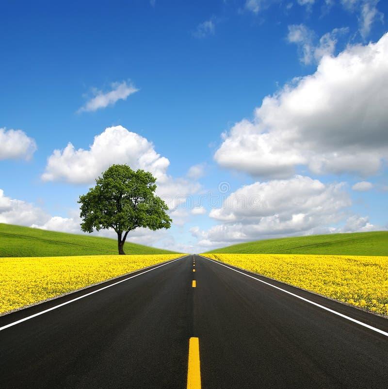 A estrada para a frente fotografia de stock royalty free