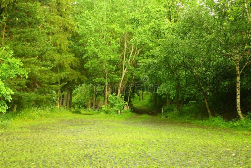 Estrada pavimentada pedra na floresta foto de stock royalty free