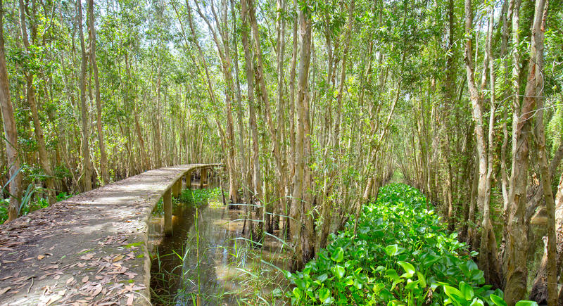 Estrada pequena através das florestas dos manguezais fotos de stock royalty free