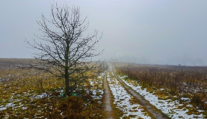 Estrada próxima sozinha da árvore foto de stock