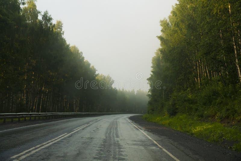 Estrada que atravessa a floresta imagens de stock