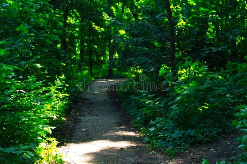 A estrada que conduz nas profundidades da floresta imagem de stock