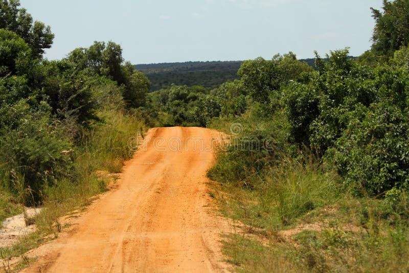 Estrada que desaparece na selva fotografia de stock royalty free