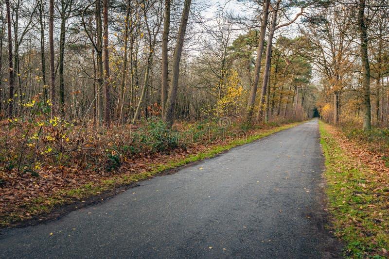 Estrada reta e convenientemente infinita na floresta outonal fotos de stock royalty free