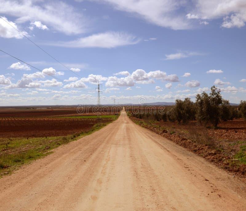 Estrada reta entre campos do vinho na primavera fotos de stock royalty free