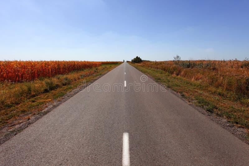 Estrada reta longa do campo fotos de stock royalty free