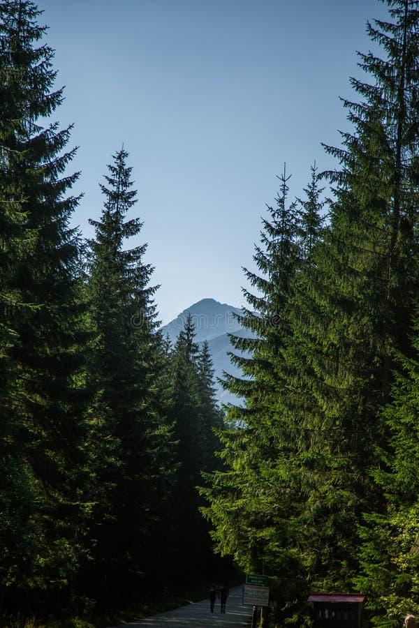 Estrada rodoviária asfaltada larga que conduz através da floresta às montanhas Cenário natural da montanha, paisagem do verão fotografia de stock royalty free