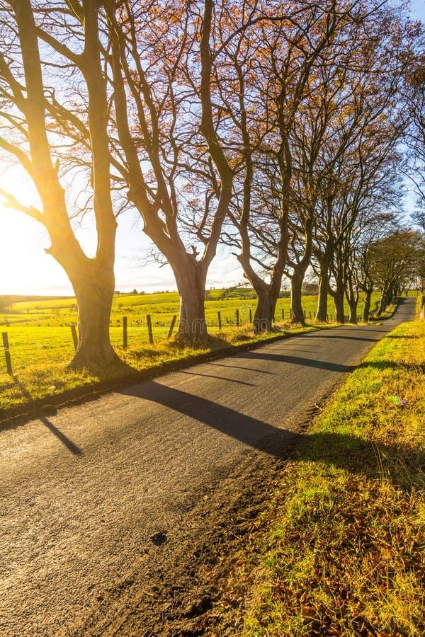 Estrada rural bonita com árvores e luz solar na mola, Escócia fotografia de stock royalty free