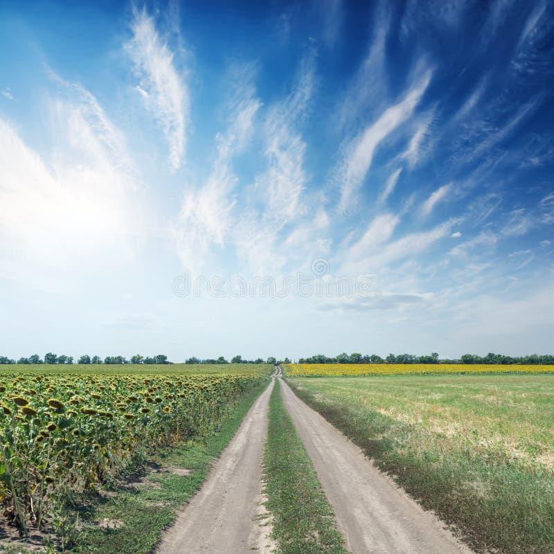 estrada rural em campos da agricultura e sol nas nuvens foto de stock
