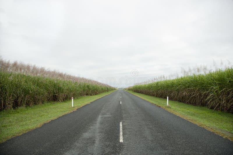 Estrada rural nas pastagem fotografia de stock royalty free