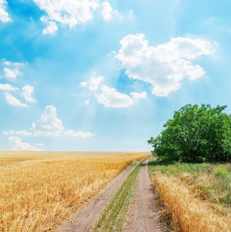 Estrada rural no campo agrícola dourado sob o céu azul fotografia de stock