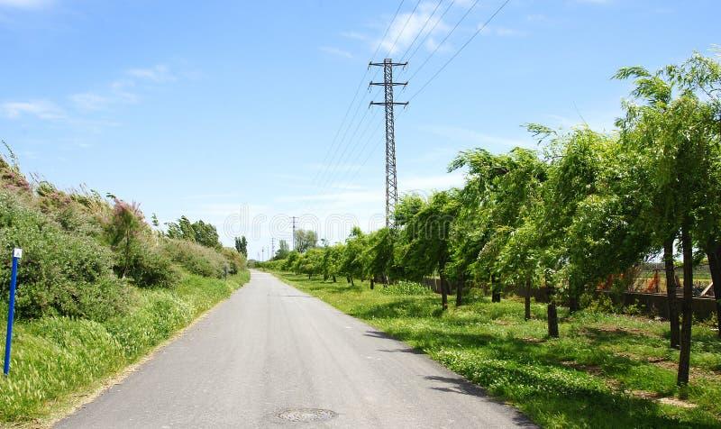 Estrada só com árvores de fruto imagens de stock