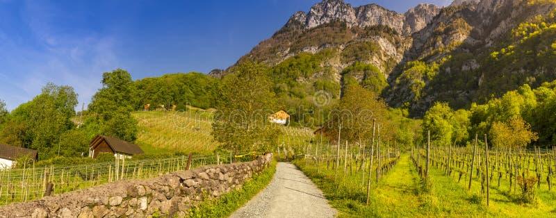 Estrada secundária através dos vinhedos às montanhas fotografia de stock
