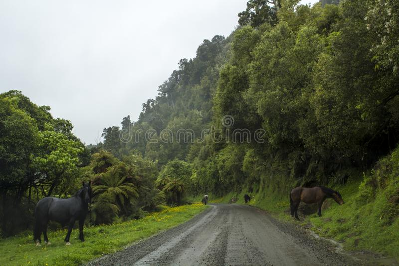 Estrada secundária com paisagem impressionante com floresta nevoenta e os cavalos selvagens imagem de stock