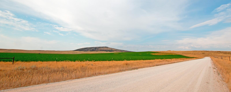 Estrada secundária da sujeira ao lado do campo sem cortes da alfafa em Montana EUA foto de stock royalty free