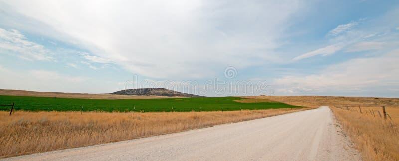 Estrada secundária da sujeira ao lado do campo sem cortes da alfafa em Montana EUA fotografia de stock