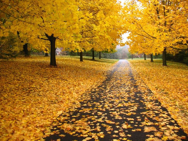 Estrada secundária dourada fotos de stock