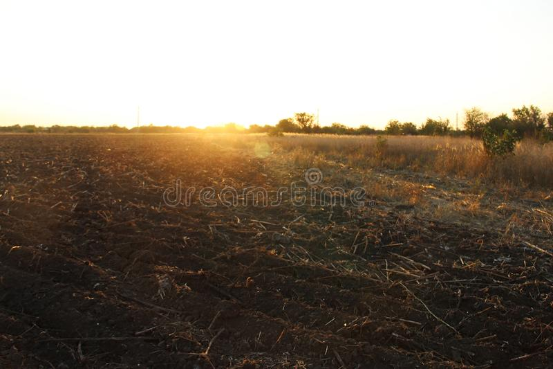 Estrada secundária e campo chanfrado dos girassóis no por do sol no outono fotografia de stock