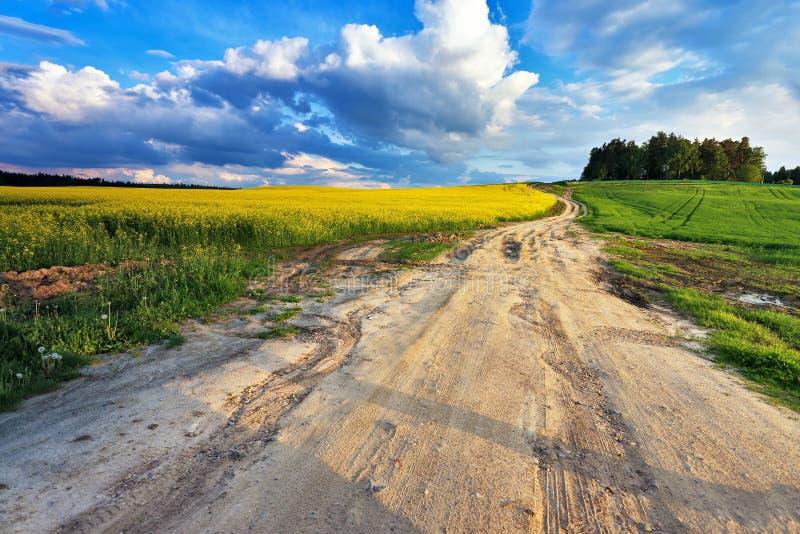 Estrada secundária em campos da couve-nabiça da mola imagens de stock royalty free