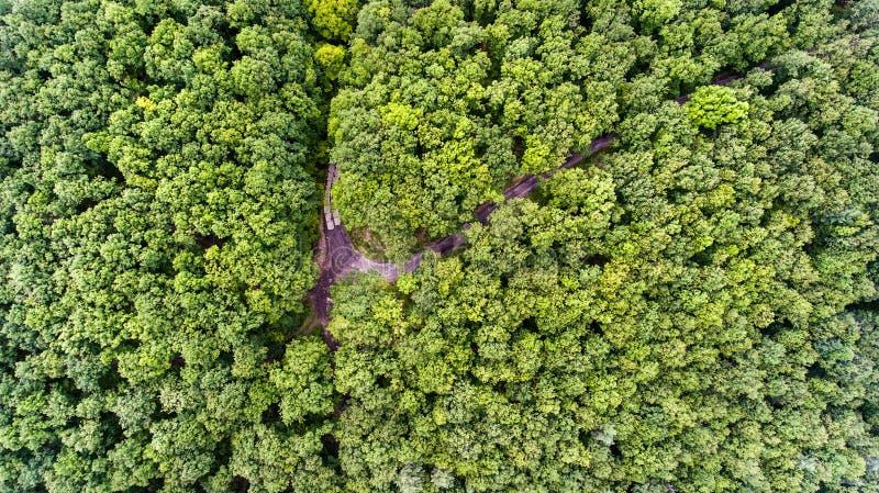 Estrada secundária na floresta decíduo ensolarada verde Países Baixos imagem de stock royalty free