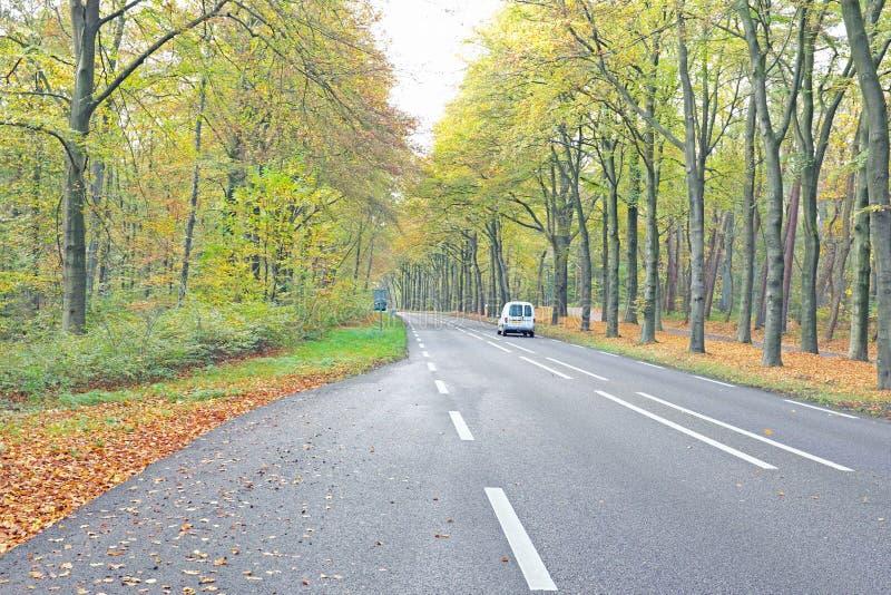 Estrada secundária na queda em Países Baixos imagem de stock royalty free