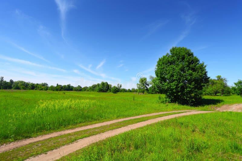 Estrada secundária no campo e em árvores verdes imagens de stock royalty free