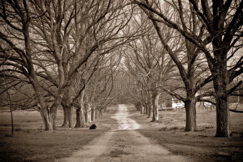 Estrada secundária no inverno foto de stock
