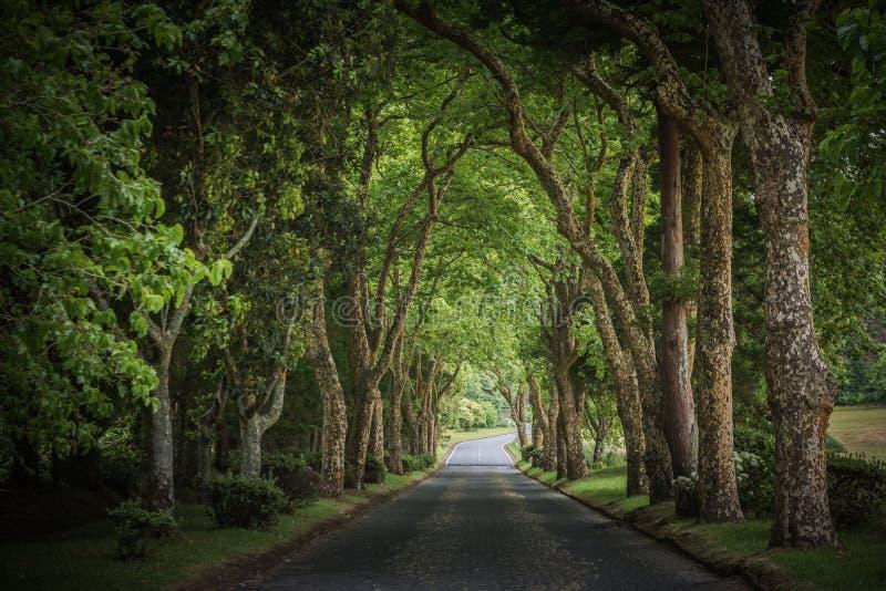 Estrada secundária que corre através da aleia da árvore imagens de stock
