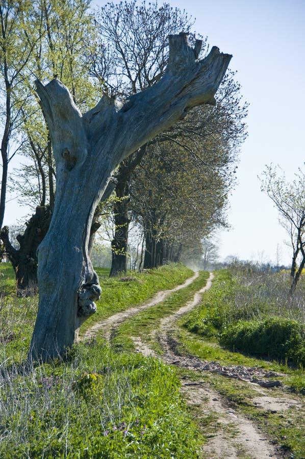 Estrada secundária rural com árvore fotografia de stock royalty free