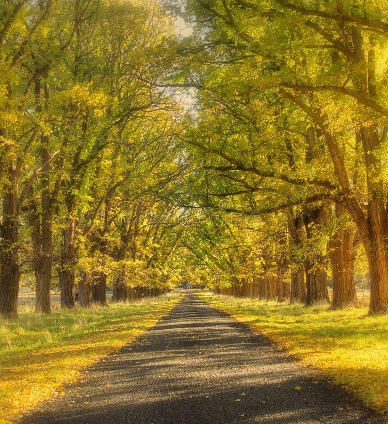 Estrada sonhadora do outono fotos de stock