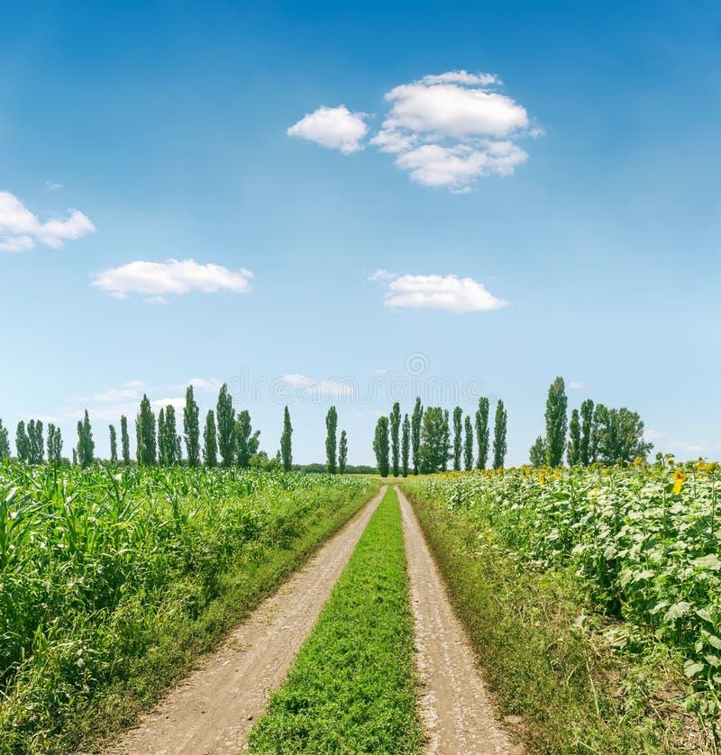 Estrada suja rural no campo verde da agricultura no tempo de mola e céu azul com nuvens foto de stock