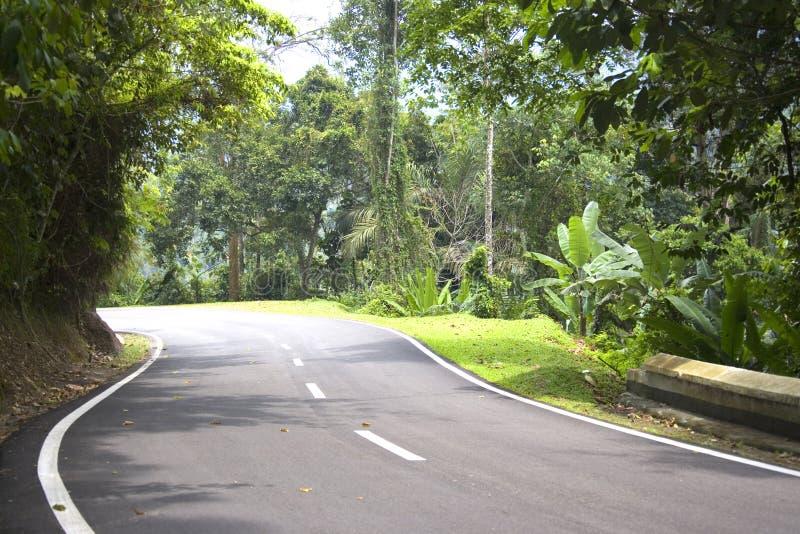Estrada tropical da floresta húmida foto de stock