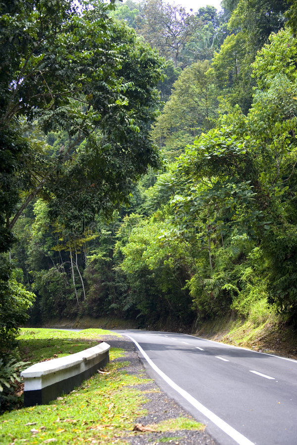 Estrada tropical da floresta húmida fotos de stock royalty free