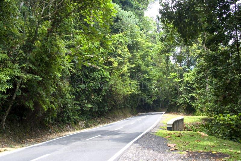 Estrada tropical da floresta húmida foto de stock royalty free
