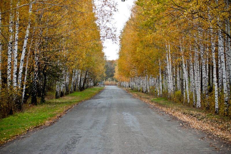 Estrada a uma madeira foto de stock royalty free