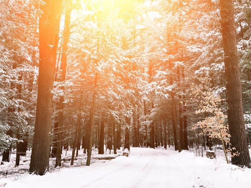 A estrada vazia atravessa madeiras foto de stock
