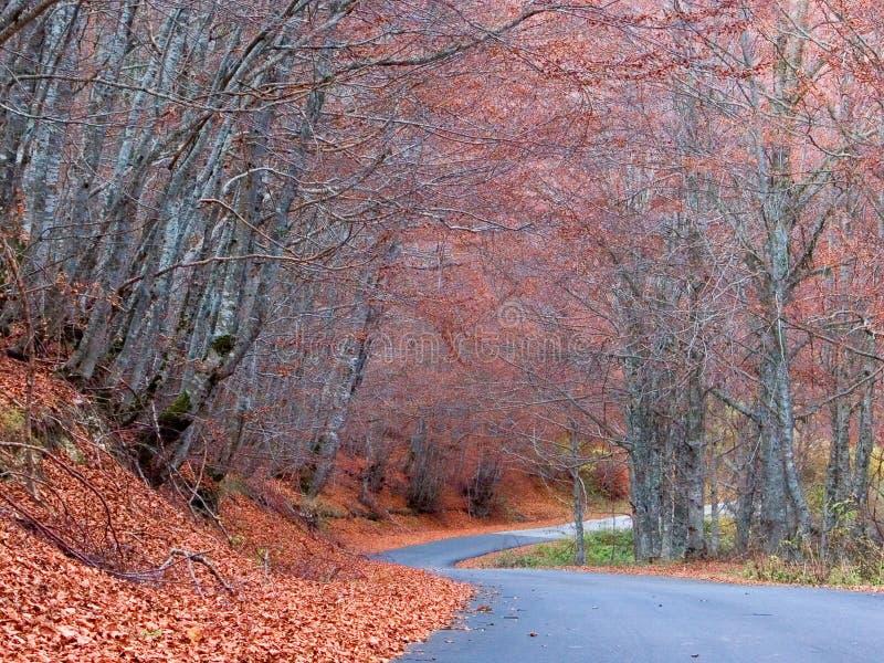 Estrada vazia na floresta fotografia de stock royalty free